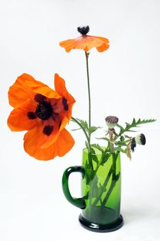 Free Poppy In Green Glass Royalty Free Stock Photos - 5550808