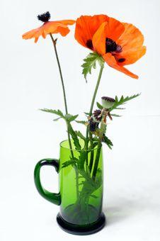 Free Poppy In Green Glass Stock Photo - 5550810