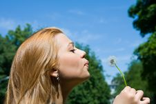 Free Girl And Dandelion Royalty Free Stock Photography - 5550897