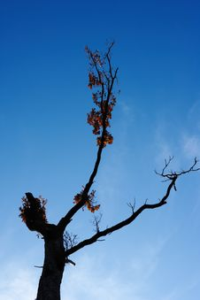 Free Dying Tree Stock Photo - 5551060