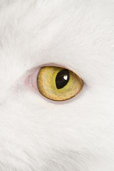 Free Cat S Eye Stock Photography - 5552142