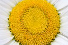 Free Flower Stock Photos - 5552143