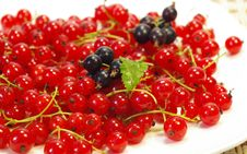 Free Currant On A White Plate Stock Photography - 5552372