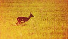 Free Animal Background. Roe-deer Royalty Free Stock Photo - 5553295