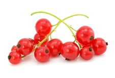 Branch Of Red Currant Fruits Isolated