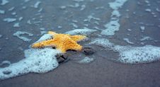Free Starfish Stock Photo - 5553420