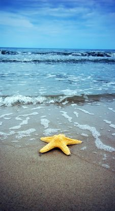 Free Starfish Royalty Free Stock Image - 5553436