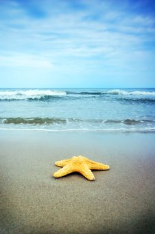 Free Starfish Stock Photography - 5553442