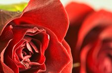 Free Abstract Close Up Of Red Rose With Droplets Stock Photos - 5553643