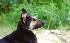 Free Dog Stock Photo - 5555660