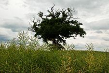 Lone Tree Royalty Free Stock Photos