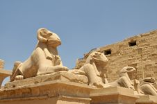 Free Avenue Of Ram-headed Sphinxes Royalty Free Stock Photo - 5556165