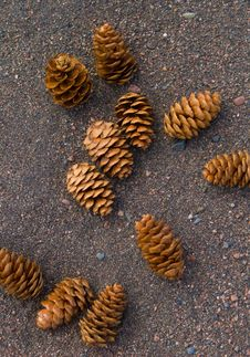 Free Pine Cones On Sand Stock Photography - 5556612