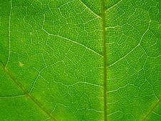 Free Leaf Stock Photo - 5558180
