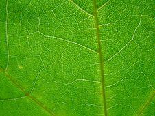 Free Leaf Stock Image - 5558191
