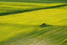 Free Coloured Fields Stock Photography - 5558782