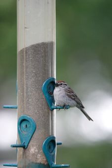 Free A Small Sparrow By The Feeder. Stock Photography - 5559612
