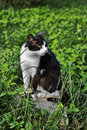 Free Black And White Cat Stock Photography - 5563192