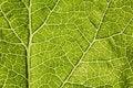 Free Leaf Macro Stock Photo - 5564690
