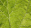 Free Leaf Macro Stock Photos - 5564763