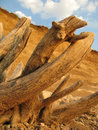 Free Dry Tree Trunk Stock Photography - 5567122