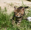 Free Kitty Walking Royalty Free Stock Images - 5568179