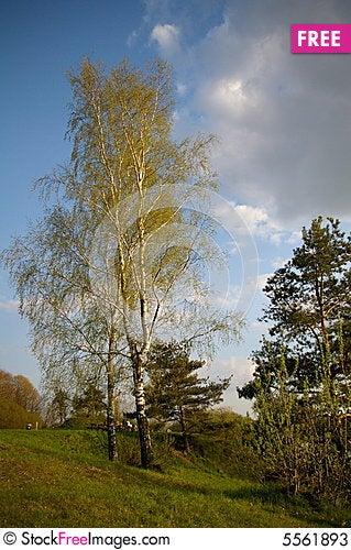 Free Lonely Trees Stock Photos - 5561893
