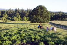 Free Horses On Walk - Horizontal Royalty Free Stock Image - 5560126