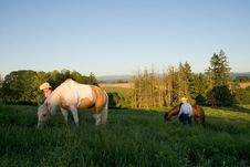 Free Walking Horses - Horizontal Royalty Free Stock Photos - 5560268