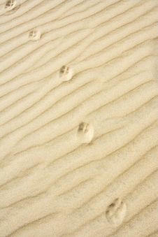 Free The Animal Footprint Stock Photo - 5560800