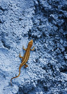Small Yellow Lizard Stock Images