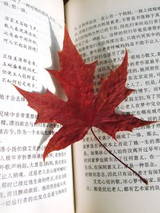 Free Maple Leaf Stock Photos - 5561363