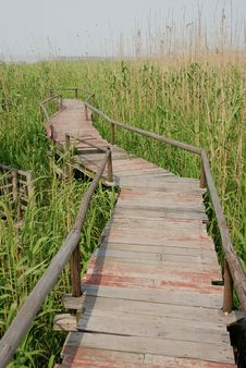 Free Wood Road In Bulrush Field Royalty Free Stock Photography - 5562027