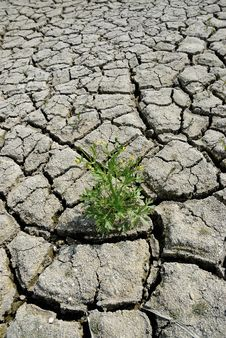 Free Cracked Earth With Green Plant Royalty Free Stock Image - 5562276