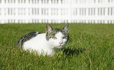 Free Cute Kitten Stock Photo - 5562440