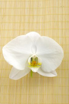 Free Orchid Royalty Free Stock Photography - 5562627
