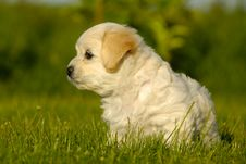 Free Puppy Stock Images - 5562844