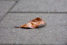 Free Autumn Leaf Stock Photos - 5563883