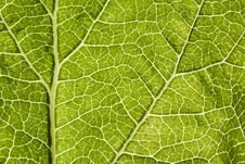 Free Leaf Macro Stock Photo - 5564690
