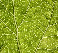 Free Leaf Macro Stock Photos - 5564763