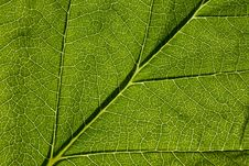 Free Leaf Macro Stock Image - 5564841