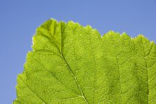 Free Leaf Macro Stock Image - 5564941