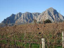Free Mountain Vineyard Stock Photos - 5565873