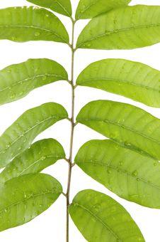 Free Green Leaf Stock Photos - 5566233