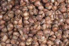 Free Shallot Background Abstract Royalty Free Stock Photography - 5566377