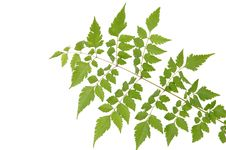 Free Green Leaf Stock Photography - 5566532