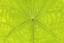 Free Green Leaf Royalty Free Stock Images - 5566669