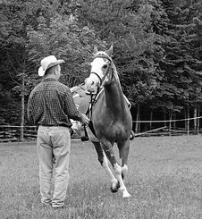 Cowboy And His Horse Royalty Free Stock Photography