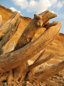 Dry Tree Trunk Stock Photography