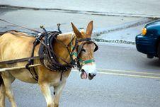 Free Donkey Vs Car Stock Photos - 5567403